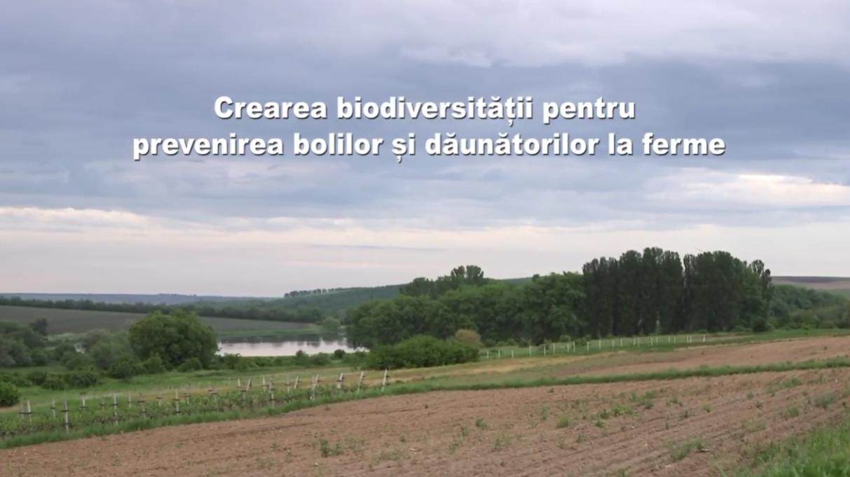 """Featured image for """"Recomandări privind crearea biodiversităţii în gospodăriile agricole"""""""